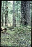 Spruce rainforest near Glacier Bay, Alaska