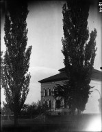 Library and Two Poplars