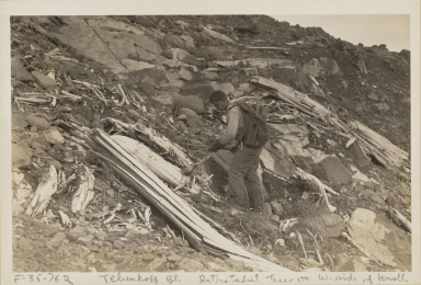 Interstadial wood on knoll of Tebenkof Glacier, Alaska