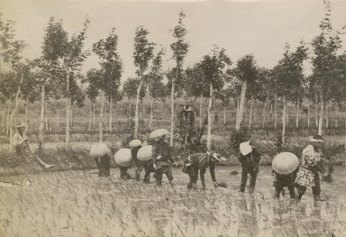 Workers in paddy fields