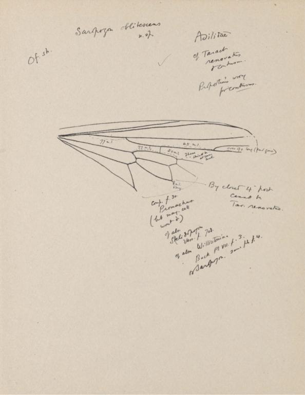 Notes on Saropogon oblitescens