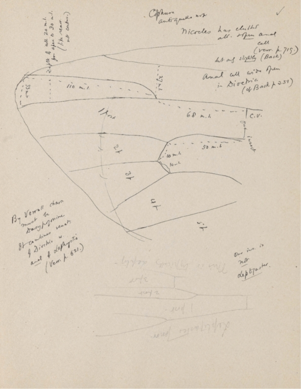 Notes on Cophura antiquella