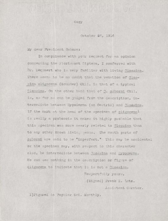Letter from Frank E. Lutz to unidentified recipient Herbert Osborn re Glossina oligocena and G. osborni