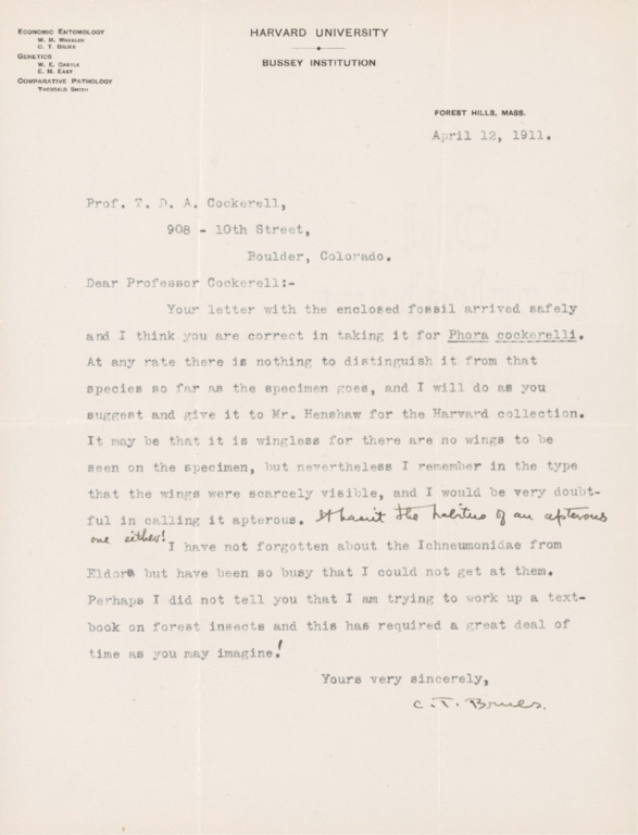 Letter from C. T. Brues to Theodore Cockerell re Phora cockerelli