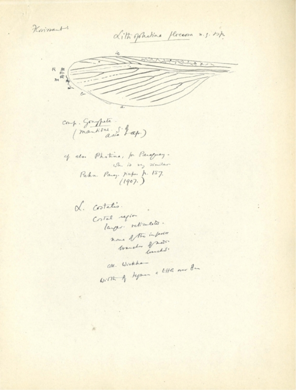 Notes on Lithophotina floccosa