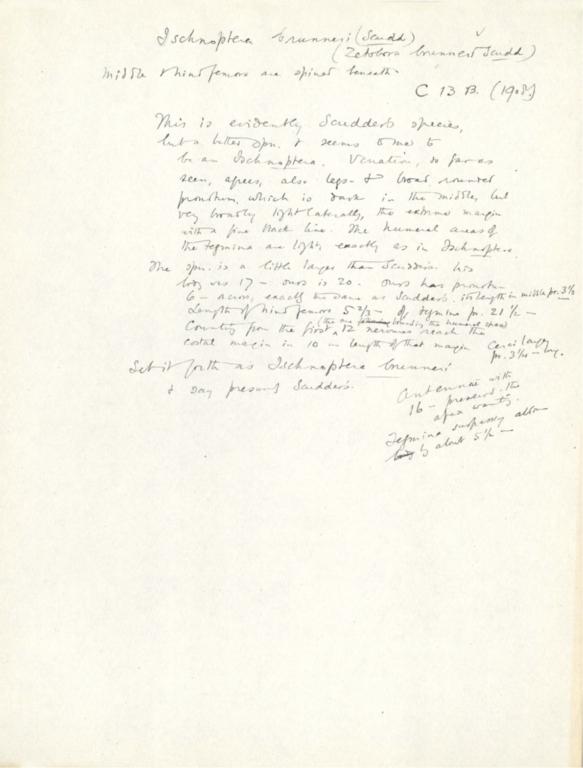 Notes on Ischnoptera brunneri