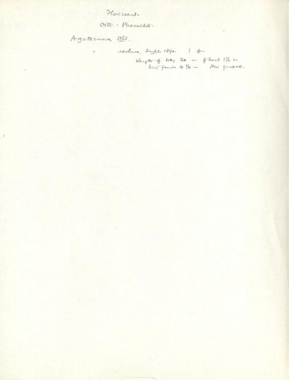 Notes on Agathemera reclusa