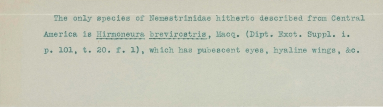 Typed notes on Hirmoneura brevirostris