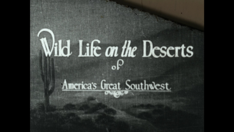Wild Life on the Deserts of America's Great Southwest