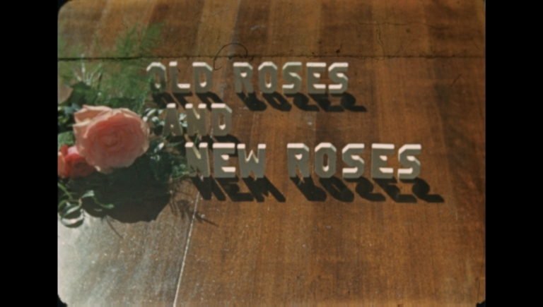 Old Roses and New Roses