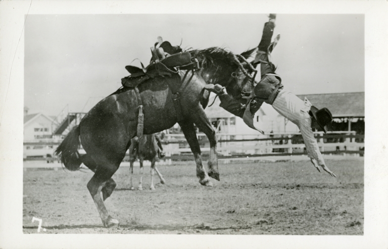 Rodeo performer thrown from bronco