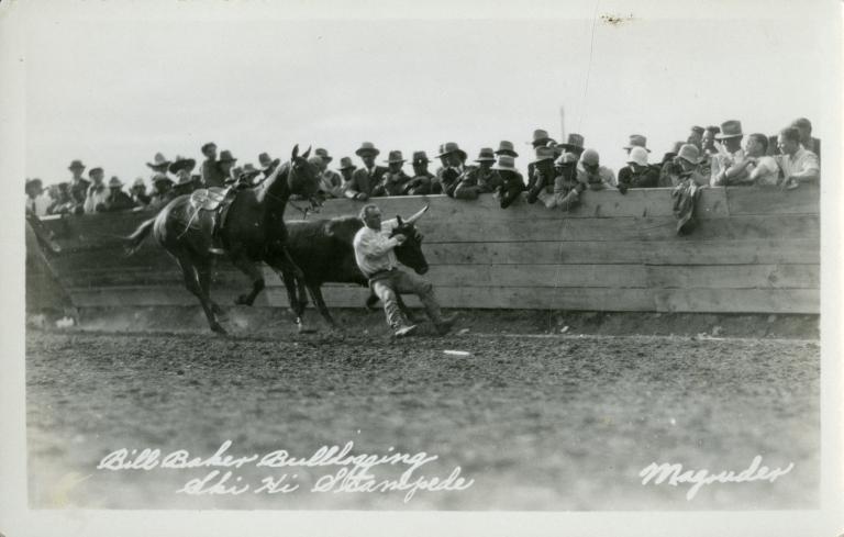 Rodeo performer bulldogging