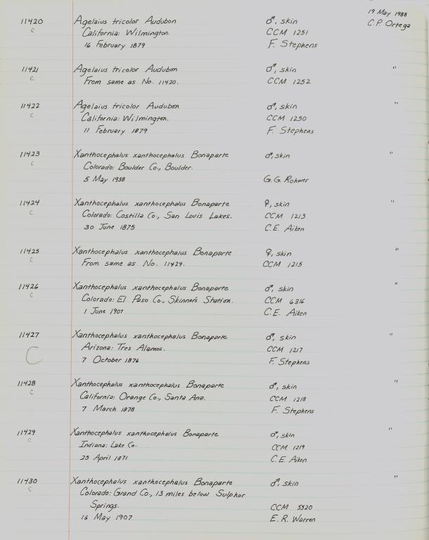Records 11420, 11421, 11422, 11423, 11424, 11425, 11426, 11427, 11428, 11429, 11430, from University of Colorado Museum Bird Catalog: no. UCM 11100-13523