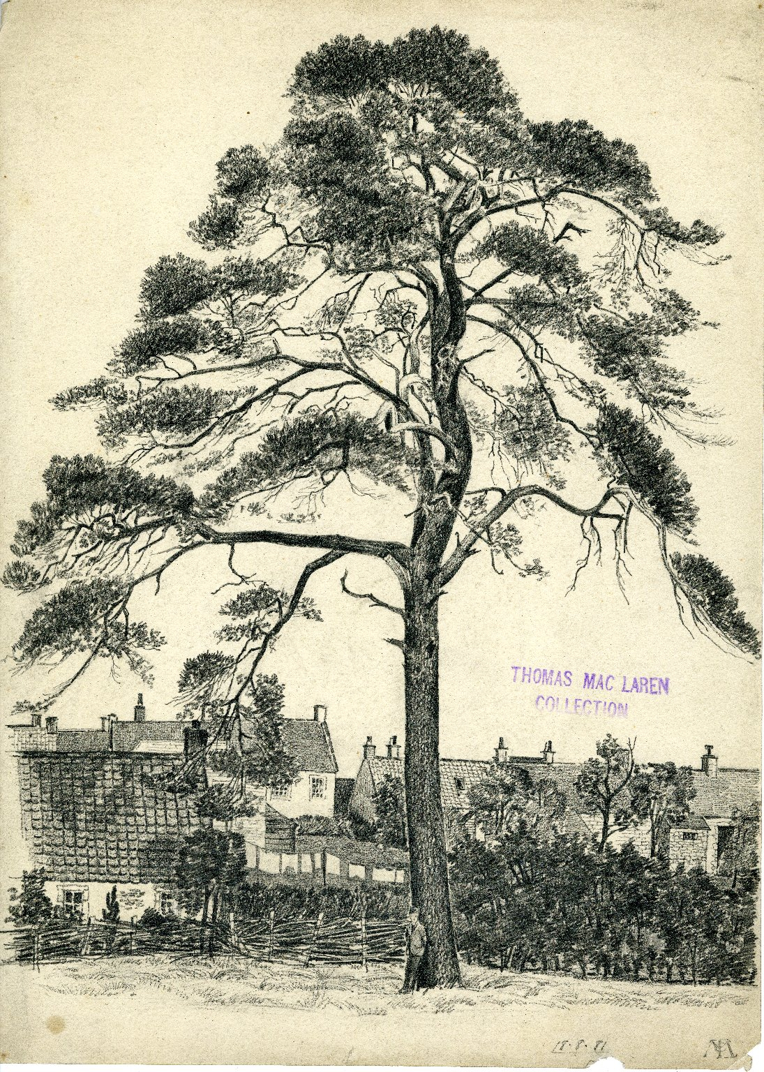 Boy leaning against tree with houses in background
