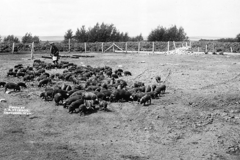 Oberfilder's Hog Ranch, Wyoming