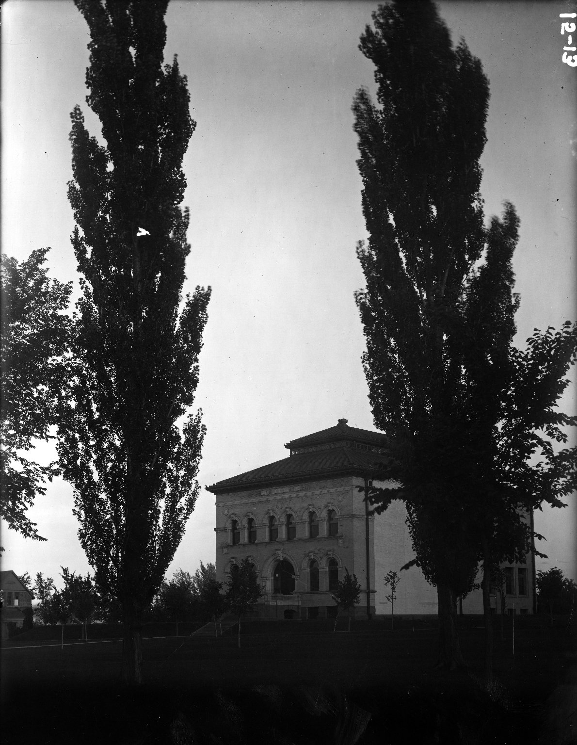 Library and Poplars