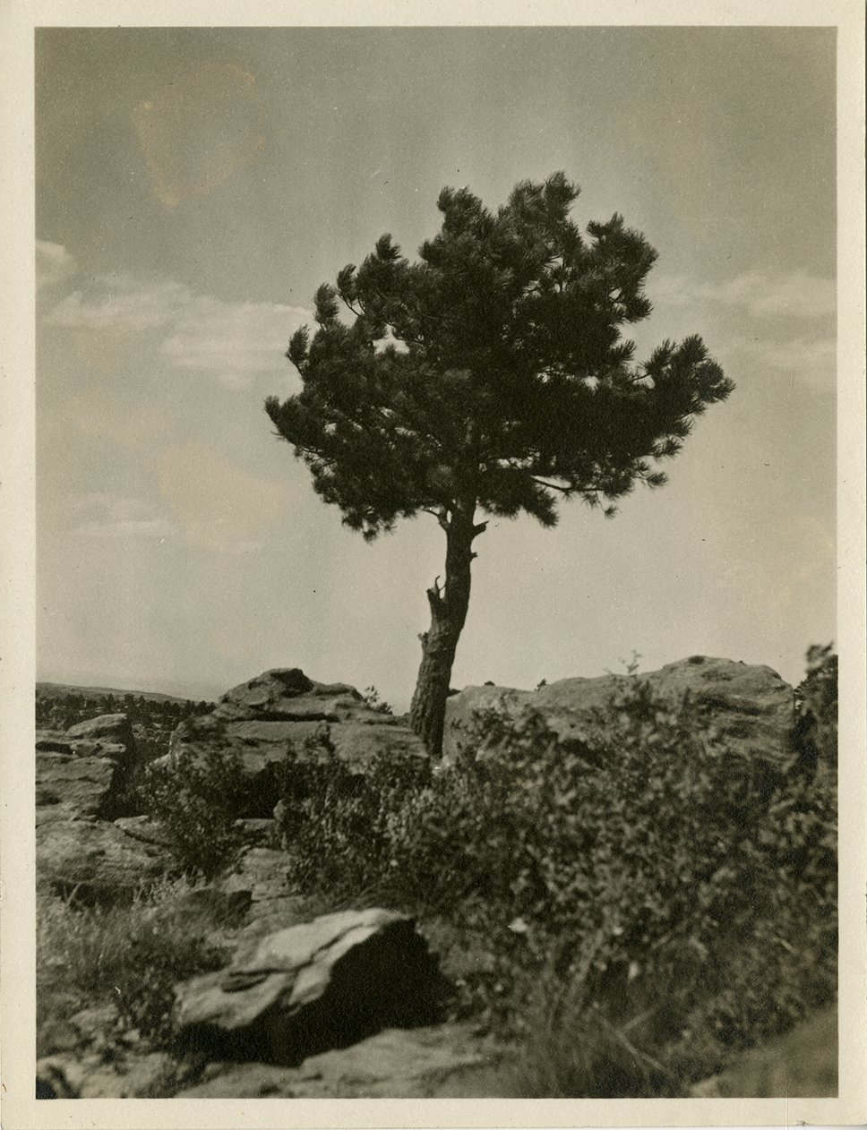 Untitled photograph of a lone pine tree among boulders.
